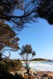 Bucht des schönen Tages der Feuer, der durch die Bäume schaut stockbild
