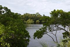 Bucht durch die Bäume stockfotos