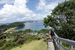 Bucht von Insel Neuseeland - Roberton-Insel stockfotografie