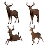 Buck Royalty Free Stock Images
