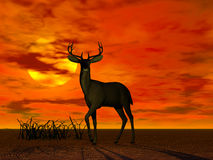 Buck. A rendering of a buck in the sunset royalty free illustration