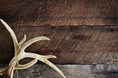 Buck Antlers over Rustic Background stock images