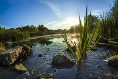 Buck canyon swamp. Landscape of canyon swamp in vilage buck central Ukraine stock image