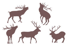 Buck deer Stock Photography