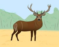 Buck deer on field, vector illustration. Buck deer on field, wildlife nature vector illustration with wild animals vector illustration