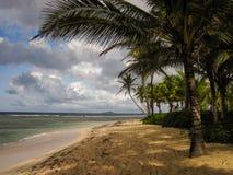 Buck Island da St Croix sotto le palme su una spiaggia sabbiosa immagini stock libere da diritti
