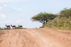 Buck Landscape Wildlife Imagenes de archivo