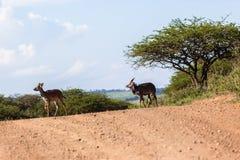 Buck Landscape Wildlife Fotos de archivo