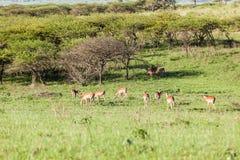 Buck Landscape Wildlife Imagen de archivo libre de regalías
