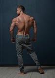 buck model fotografia royalty free