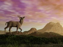 Buck in the mountain - 3D render Stock Images