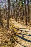 Buck Mountain Trail royalty-vrije stock fotografie