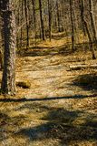 Buck Mountain Trail royalty-vrije stock foto