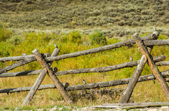Buck and rail fence in rural area Stock Images
