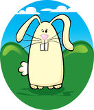 Buck Tooth Bunny Stock Photo