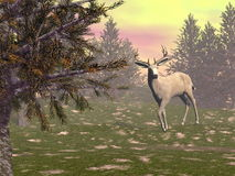 Buck in the woods - 3D render Stock Images
