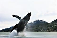 Buckelwalbrunnen in Juneau Alaska lizenzfreie stockbilder
