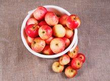 bucket при красные яблоки собранные и лежать рядом с кучей яблок Стоковые Фотографии RF