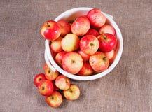 bucket при красные яблоки собранные и лежать рядом с кучей яблок Стоковое Фото