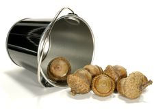 Bucket of Acorns Royalty Free Stock Photos