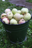 Bucket of apples Royalty Free Stock Photo