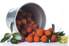 Bucket with arbutus unedo fruits over white. Bucket with arbutus unedo fruits, leaves and flowers isolated on a white background Stock Image