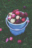 Bucket with autumn apples on green grass background Royalty Free Stock Photos