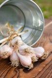 Bucket and beam of garlic on wood Stock Photos