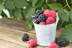 Bucket of blackberry and raspberry Royalty Free Stock Image