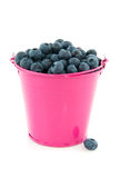 Bucket blueberries Stock Photography