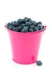Bucket Blueberries Stock Photography
