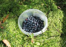 Bucket with blueberries Stock Photos