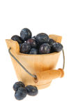 Bucket blueberries Stock Photo