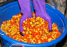 A bucket of boiled colored corn. For fishing stirred Royalty Free Stock Photos