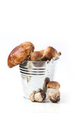 Bucket of cep mushrooms Stock Images