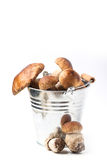 Bucket of cep mushrooms Royalty Free Stock Photography
