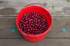 Bucket with cherries Royalty Free Stock Photos