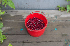 Bucket with cherries Royalty Free Stock Photography