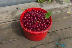 Bucket with cherries Stock Images