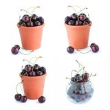 The bucket of cherries set Royalty Free Stock Images