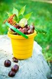 Bucket of chestnuts and rowan Stock Photos