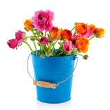 Bucket colorful Buttercups Stock Image
