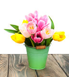 Bucket with colorful tulips Stock Images