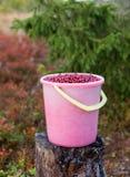 Bucket com os arandos vermelhos na floresta careliana, Rússia foto de stock royalty free
