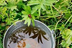 Bucket con agua de lluvia Foto de archivo