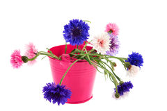 Bucket Cornflowers Royalty Free Stock Images
