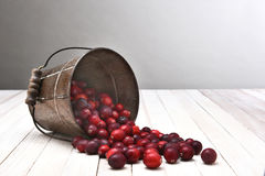Bucket of Cranberries Spill Royalty Free Stock Photos