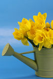Bucket of Daffodils Royalty Free Stock Photography