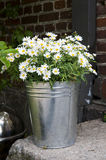 Bucket of Daisies Royalty Free Stock Photos