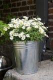 Bucket of Daisies Royalty Free Stock Photos